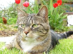 Make cat-away spray Mix up a batch of cat-away spray. Combine 1 tsp of black pepper, dry mustard & cinnamon in a spray bottle with a few drops of citrus essential oil and a crushed garlic clove. Fill to the top with water. Apply to your garden beds. Rumour has it that this magic combination of strong scents is unparalleled kitty repellent.