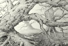 Drawing of a old, dead tree - based on a photo I took years ago. Pencil on bristol paper. Pencil Drawings For Beginners, Realistic Drawings, Pencil Drawing Tutorials, Drawing Ideas, Paper Tree Classroom, Dead Forest, California Palm Trees, Birch Tree Art, Pine Tree Tattoo