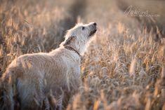 Amálka Dog Photography, Dogs, Animals, Animales, Animaux, Pet Dogs, Doggies, Animal, Animais