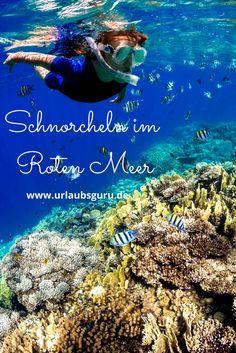 Das Rote Meer ist ein Paradies für Schnorchler und Taucher. Es reiht sich in die Riege der größten und schönsten Tauchgebiete weltweit ein und kann durchaus in einem Atemzug mit den Malediven, Thailand oder Australien genannt werden. Kommt mit auf einen Ausflug zum Roten Meer und entdeckt seine unglaubliche Artenvielfalt! Red Sea, Backpacking, Diving, Egypt, Safari, Thailand, Road Trip, Africa, Movie Posters