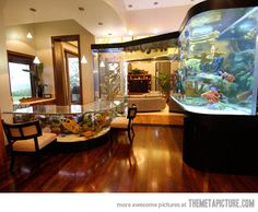 A fish tank done properly…