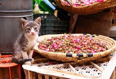 Morocco, Cat and Roses at Moroccan Souq
