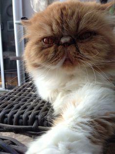 A cat's selfie.