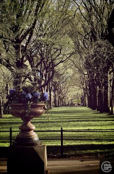 Central Park, New York City. Gardens, Lawns. Sculptures, Ponds, Fountains and so much more