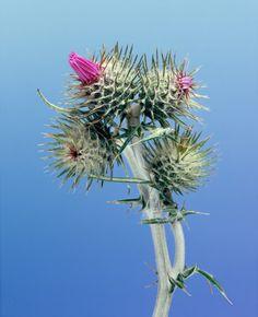 Modern Botanical Studies By Erwan Frotin