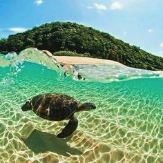 Caretta caretta sea turtle, Zakynthos, Greece