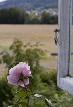 Acredito na ideia romântica de que o amor é uma janela, eternamente aberta para vida, por onde entram a luz, o calor, os bons ventos e por onde a gente escapa quando o coração anseia descobrir novos horizontes. Rosi Coelho***