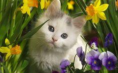 Kittens Cute Kitten #catsincare - Care for cat at Catsincare.com!
