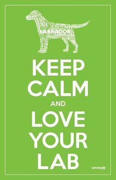 Keep calm and love your #LAB  labradors.com