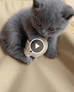 Friendship cat and mouse. friendship cat and mouse cats with big eyes Happy Animals, Animals And Pets, Funny Animals, Cute Animals, I Love Cats, Cute Cats, Funny Cats, Funny Cat Compilation, Videos Funny