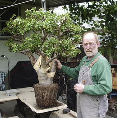 Ed Gordon's 35 year old Jade plant!! Beautiful, good article too.