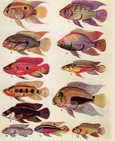 Fishes - Poissons