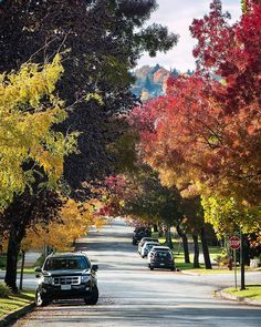 Autumn Ridge  . Vancouver shows off it's fall colours in the beautiful neighbourhood of Arbutus Ridge. A colourful throwback after a grey and rainy day here in paradise. Captured in Vancouver, British Columbia, Canada ~ October 20, 2017  . Signed, All Leafed Out October 20, Sunshine Coast, Autumn, Fall, Travel Posters, British Columbia, Vancouver, Seaside, The Neighbourhood