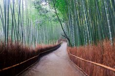 Bamboo Walk in Kyoto, Japan ~ photo from Kathy~'s flickr stream