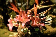 fabulous teepee flowers