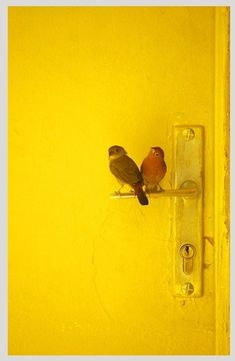 birds on a yellow door handle by MyohoDane Jaune Orange, Yellow Doors, Yellow Brick Road, Yellow Submarine, Shades Of Yellow, Mellow Yellow, Bright Yellow, Color Yellow, Mustard Yellow