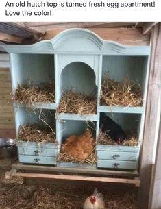 #chickencooptipshens Chicken Coop Designs, Cute Chicken Coops, Chicken Coup, Backyard Chicken Coops, Chicken Coop Plans, Chickens Backyard, Chicken Coop Decor, Chicken Feeders, Chicken Tractors
