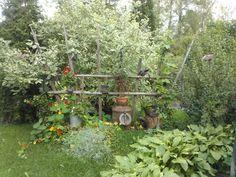 Äidin puutarha, lopputulos Plants, Flora, Plant, Planting