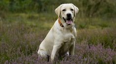 Labrador Takes Bath Revenge With Human