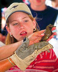 Become a Sarasota Bay Explorer for the day