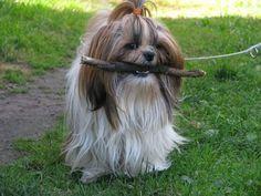 A twig ;)