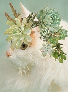 We love these Stephen Eichhorn 'Cats and Plants'!