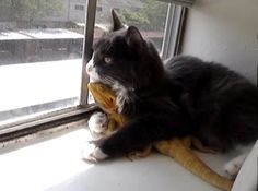 Kitties not seem to mind bearded dragons
