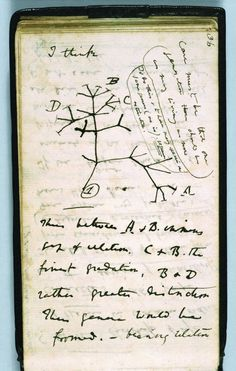 Charles DARWIN. Tree of Life / A reproduction of the first-known sketch of an evolutionary tree describing the relationships among groups of organisms   © Syndics of Cambridge University Library