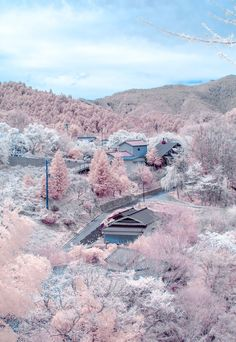 Cherry blossoms in full bloom at Mount Yoshino, Nara, Japan.