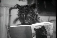 Fala reading his biography