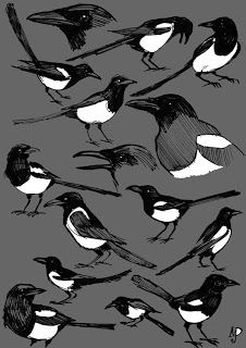 Well I just cannot seem to get away from magpies. Over the last two years I had 7 requests for Magpie logo designs. Magpie Tattoo, Crow Art, Bird Art, Bird Drawings, Animal Drawings, One For Sorrow, Jackdaw, Australian Birds, Pictures To Paint