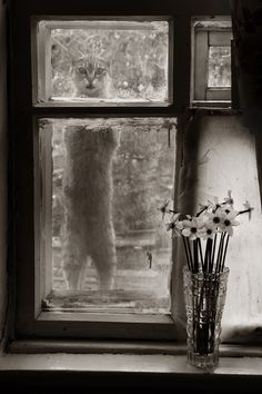 Cat at window with vase of daffodils.