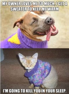 Cat And Dog #Love, #Sweater