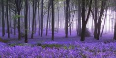 field, forest, landscape, nature, purple, trees