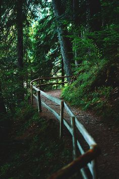 this path looks like it would be fun to hike in