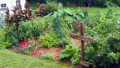 Planting veggies near walnut trees occasionally requires raised beds.