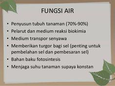 Image result for fungsi air dalam tanaman, diagram