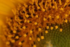 Ps, Photographs, Plants, Photos, Plant, Photo Manipulation, Planets