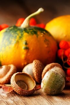 pumpkins and acorns...