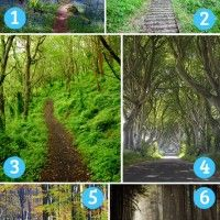 The Path you choose reveals details about your subconscious, and the path you're on. Fun Test: The Path You're Drawn To Tells Your Personality And Fortune Something About You, Things To Think About, Types Of Pizza, Fun Test, Quiz Me, Forest Path, Personality Quizzes, To Tell, Are You Happy
