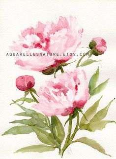 Peonies, Original watercolor painting, Floral art, peony painting, Floral…