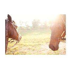 #horses #photography