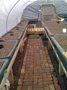 Garden Aquaponics in the UK | Growing Fruit, Fish and Veges in our chilly Northern garden