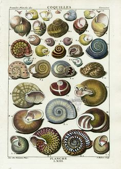:: Shell Prints from La Conchyliologie by Dezallier d'Argenville, 1780
