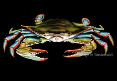 Blue Crab Colored Pencil Drawing By TimJeffsArt On Etsy