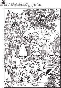 1000 Images About Gardens Birds Colouring Pages On