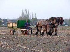 Afbeeldingsresultaat voor paard en wagen van vroeger