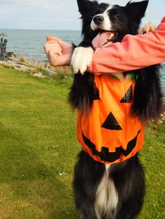 """""""Yes...I'm up in arms about being made into a country Bumpkin...sorry I mean Pumpkin...... but I know you still love me anyway...Mom"""""""