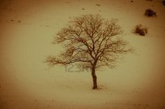 One solitary tree in mountain with snow - Umbria - Italy.