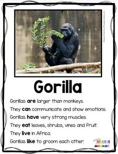 GORILLAS - Nonfiction Reading and Writing for Primary Students - Kindergarten and First Grade - Non-Fiction resources to teach animal reports and animal crafts - complete curriculum FREE activities and printables - graphic organizers Zoo Activities, Writing Activities, Teaching Reading, Guided Reading, Learning, Teacher Workshops, Kindergarten Science, Preschool, Fun Facts For Kids